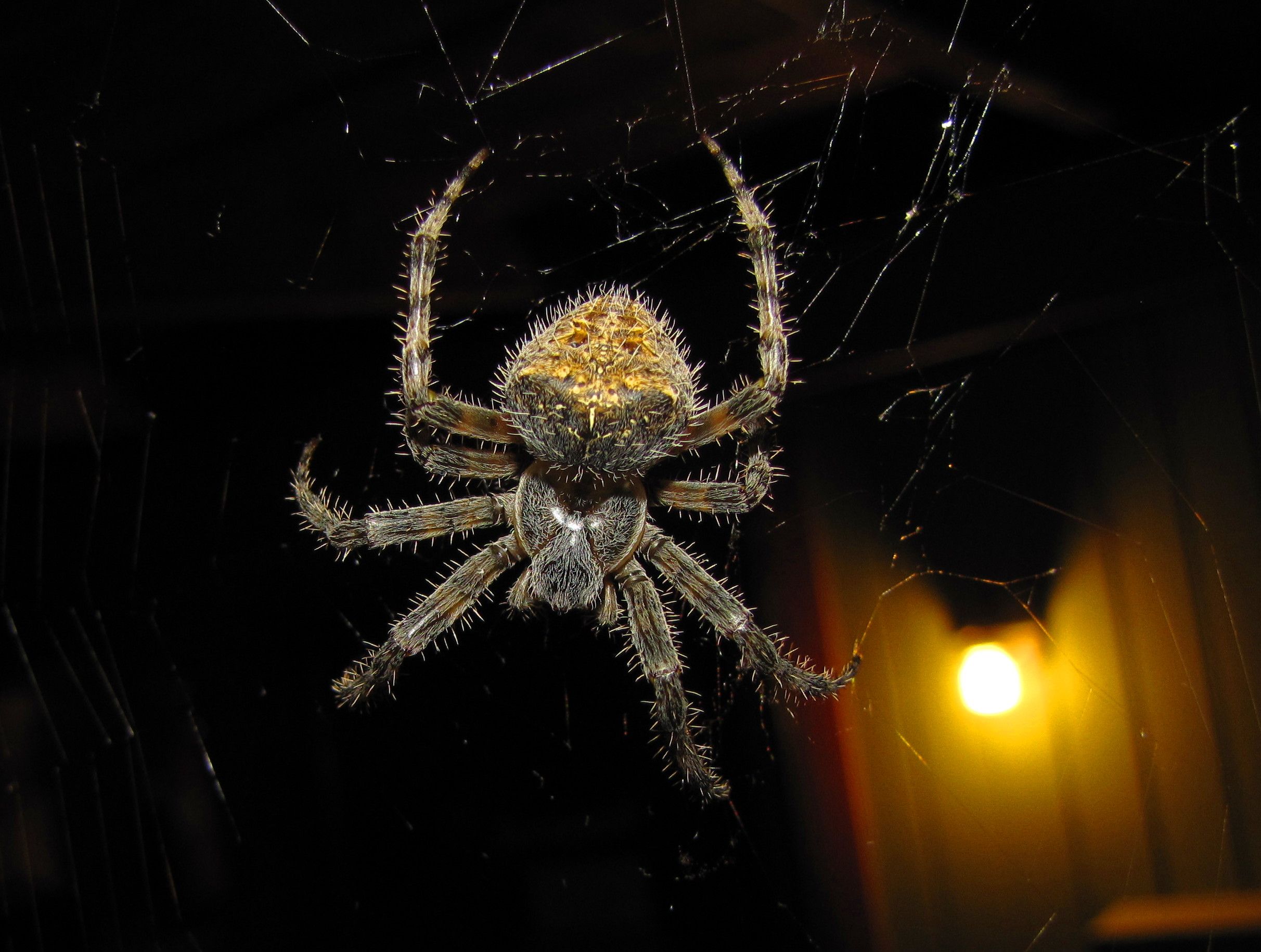 Spider on the Porch
